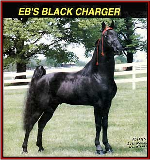 EB'S BLACK CHARGER