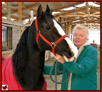 Mary Ellen Areaux welcoming Delights Dynamic Boy to his new home at Walkers West.