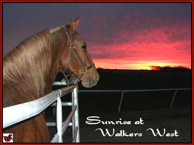 Generator's Charmer - Tennessee Walking Horse at stud.