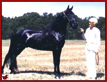 Tennessee Walking horses - Mary Ellen and Jamaica Shaker.jpg (19304 bytes)