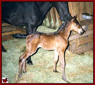 Brand New Warrior Filly out of Wild Child