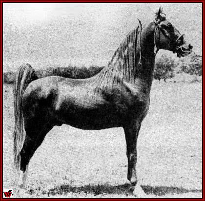 Tennessee Walking horses - Gold Bond